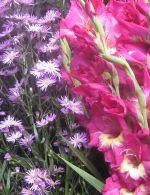 bunga-lembang